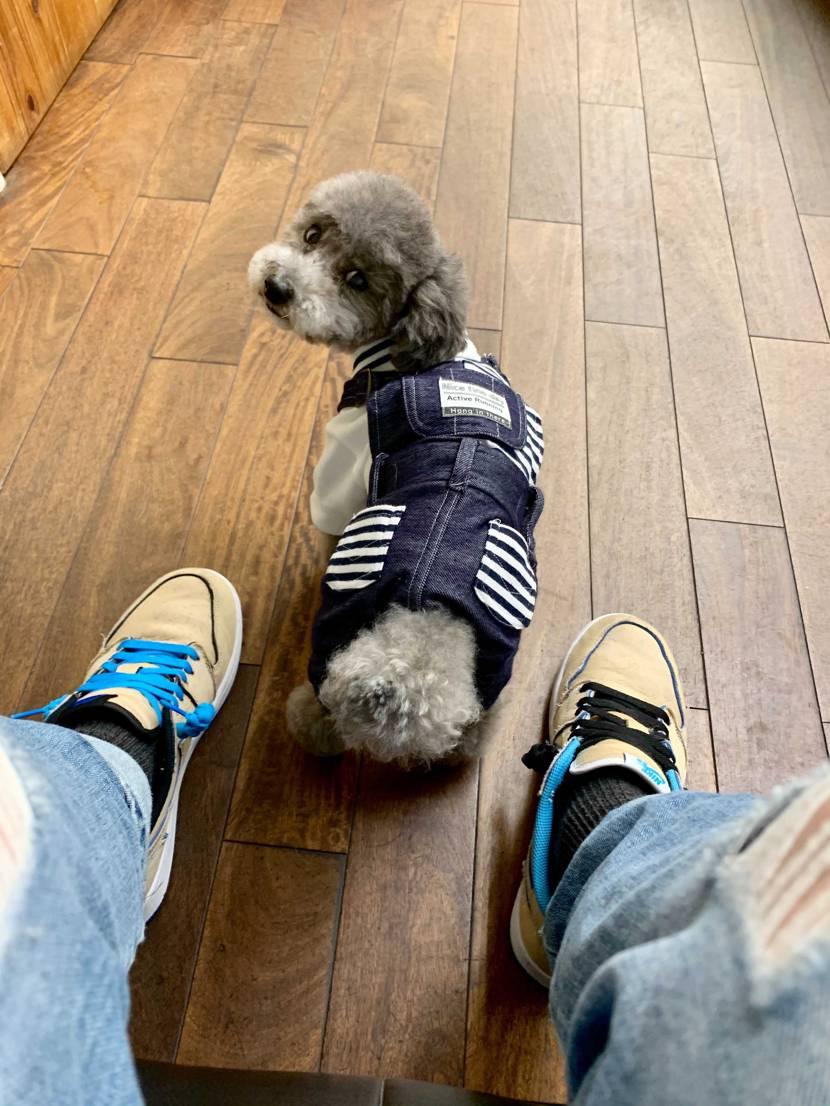 足元一つで、愛犬もオシャレに魅せる事が出来る。 トイプー×