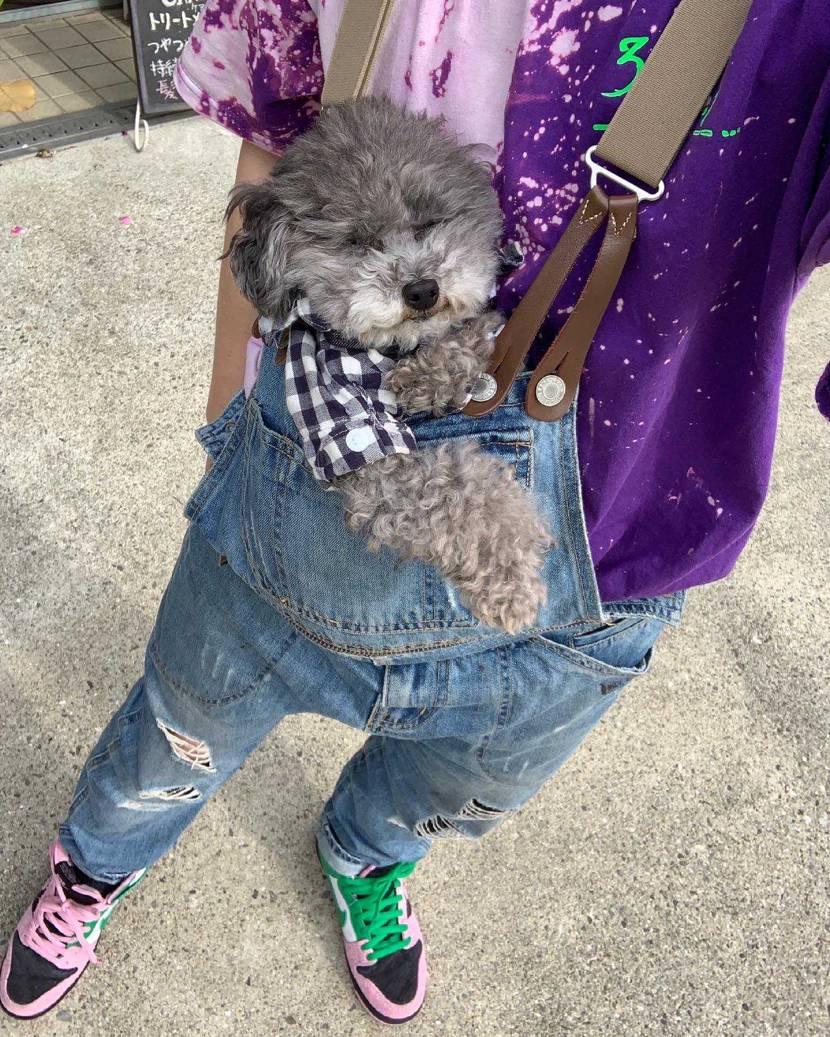 愛犬トイプーをより可愛いく引き立てるNIKEスニーカーは神器だと思う。 足元は