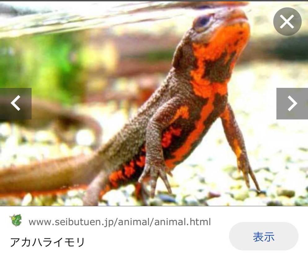 あばばばばばばば! おぼぼぼぼぼぼぼ! やっぱいた〜!こんな色した爬虫類…あ