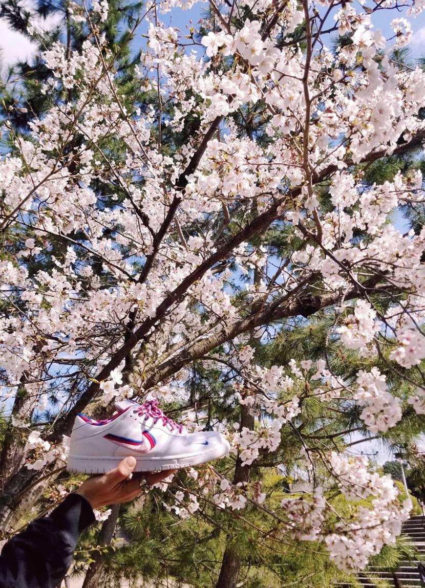 パラと桜👟🌸