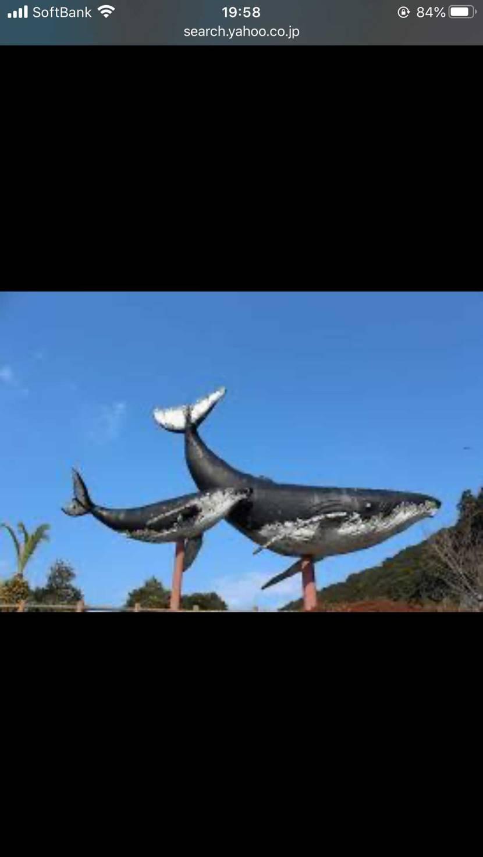 命名「クジラ GOD🐳」 or  「シャチ GOD 」 単色多かったから新しい