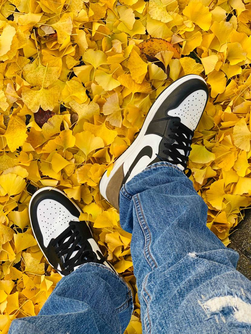 秋って感じがでて凄くいいですよ‼︎