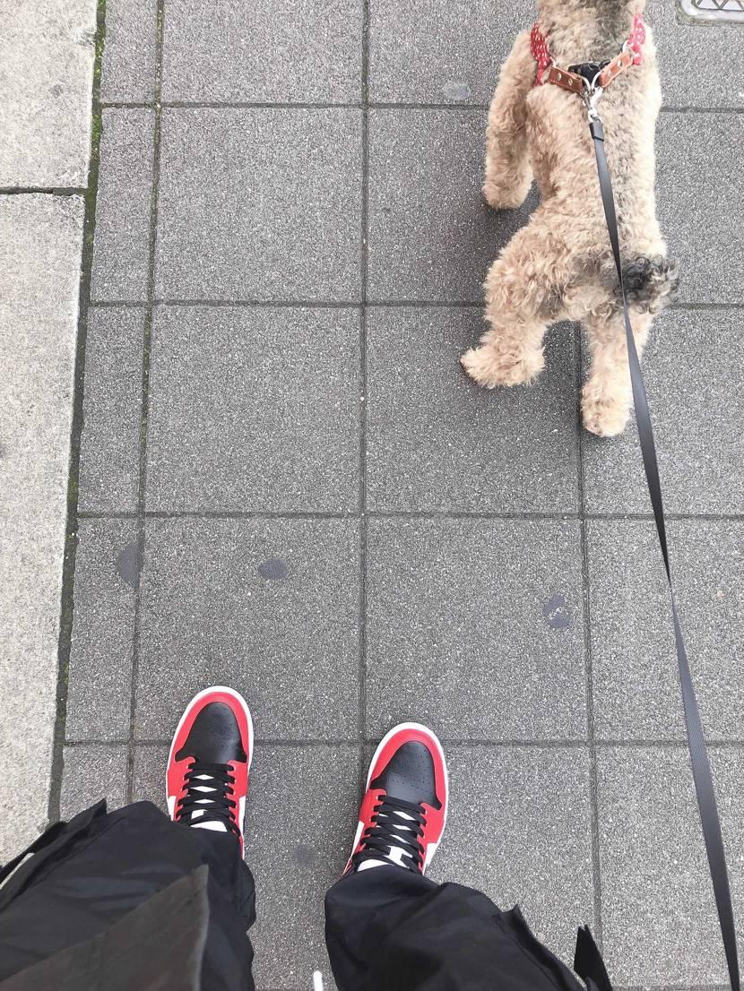 犬の散歩ぐらいしか履ける機会ないんよなぁ、、  早くコロナ治ってもっと自由に