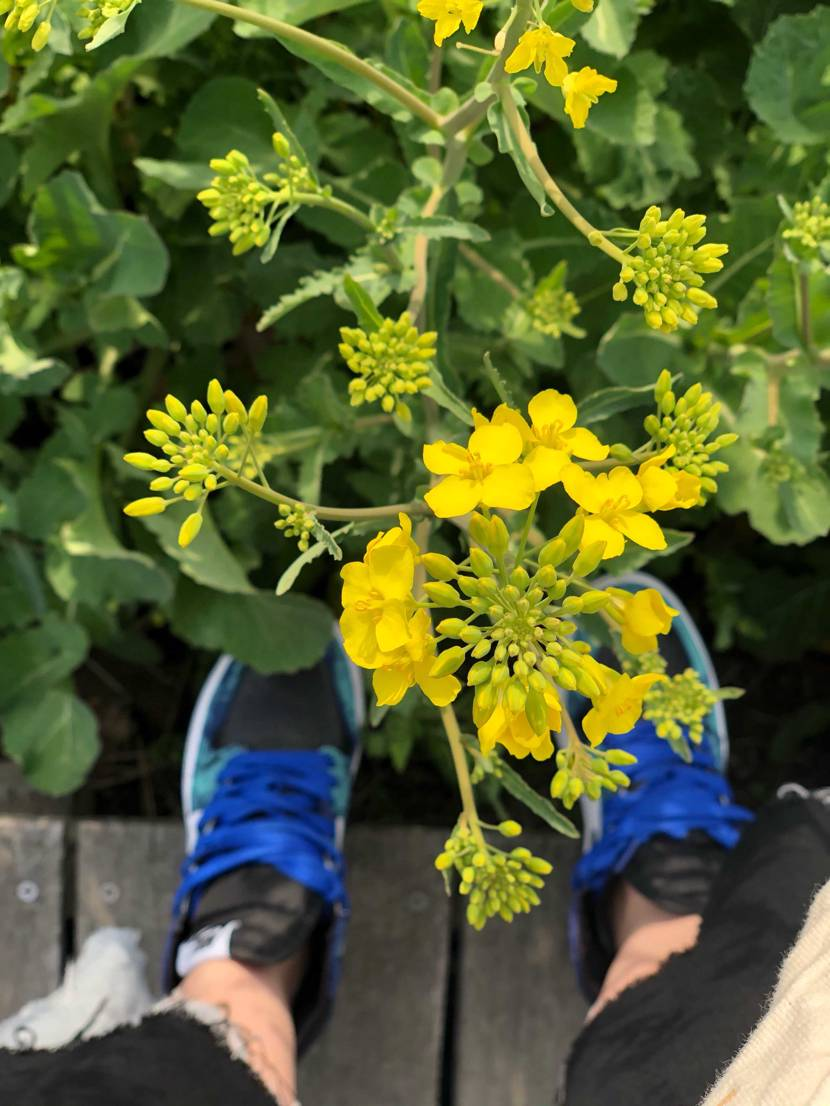 菜の花と🌱☘️🍀☺️