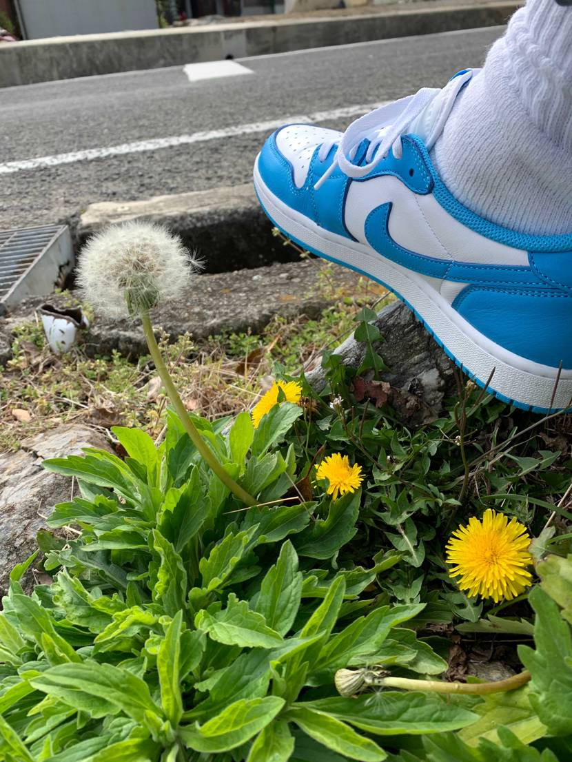 たんぽぽとunc🌼小さい春見つけました🔍