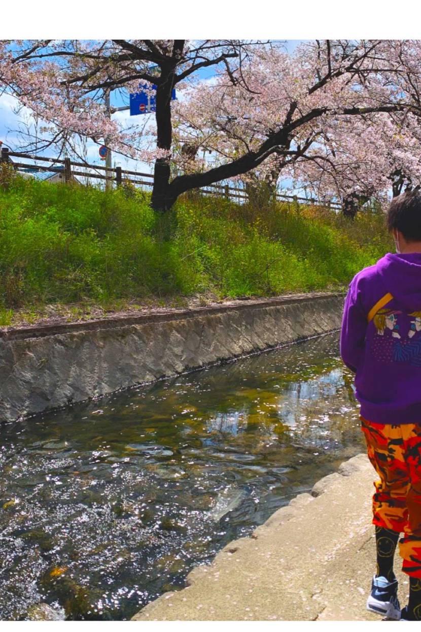 桜綺麗でしたねぇ