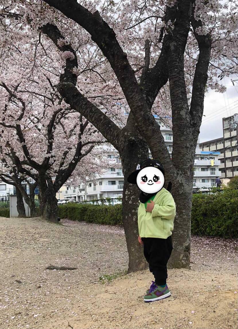 ちびダムと2人で桜を見に行ってきました😁 見頃も過ぎていたので、葉桜混じりでし