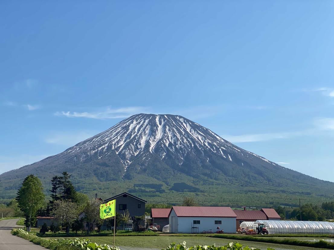 初夏のニセコ(*´꒳`*)  気持ち良い天気の中、羊蹄山前のカフェでジントニ
