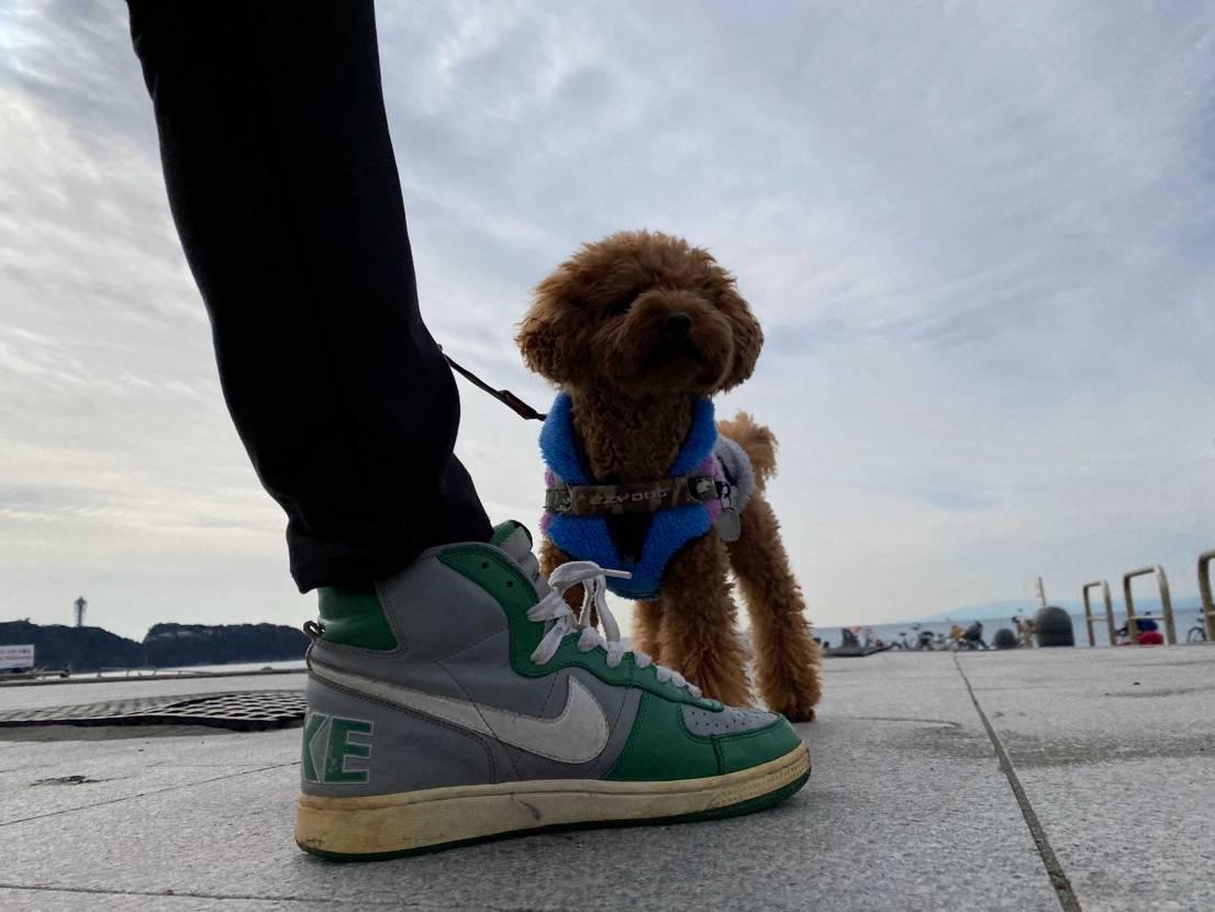 """今日のお散歩は、NIKE ターミネーターハイ""""ボストンセルティックス25"""" ミ"""